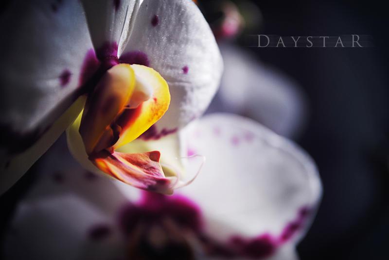Blooming midnight by Daystar-Art