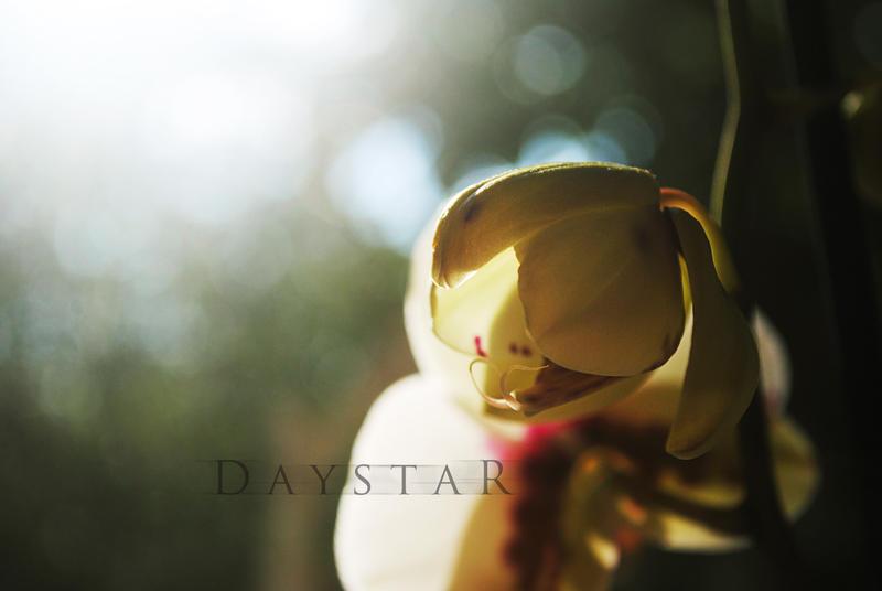 Geburt by Daystar-Art