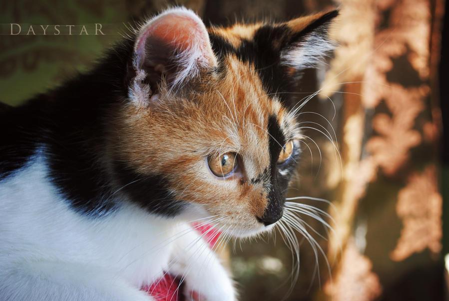 Curiosity by Daystar-Art