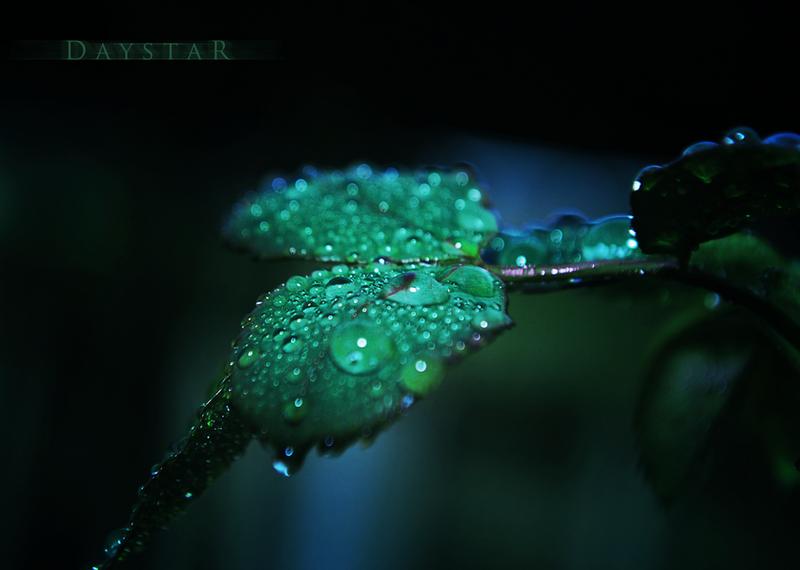 Green dusk by Daystar-Art