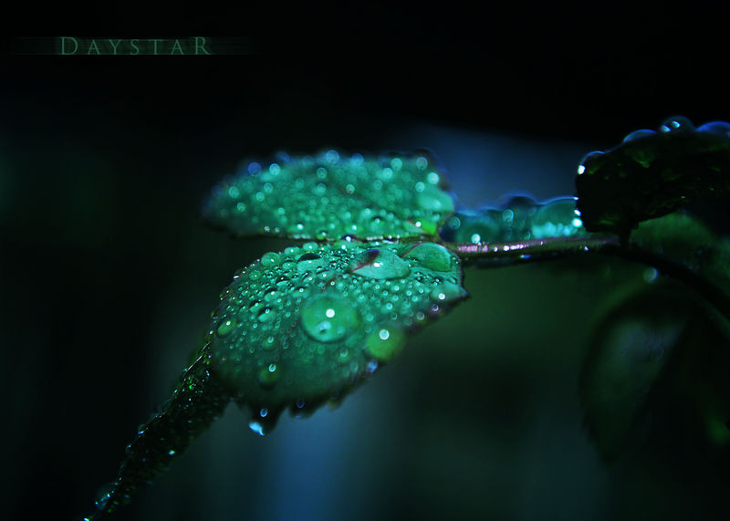Green dusk by Daystar-Art