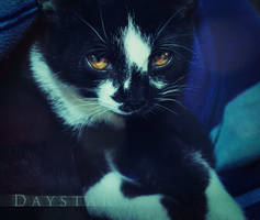 Charlie boy by Daystar-Art