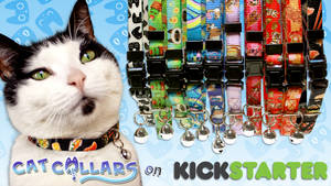 Cat Collars with PURRsonality on Kickstarter!