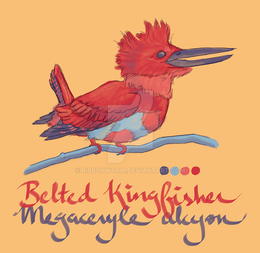 Banded Kingfisher by ribbonworm