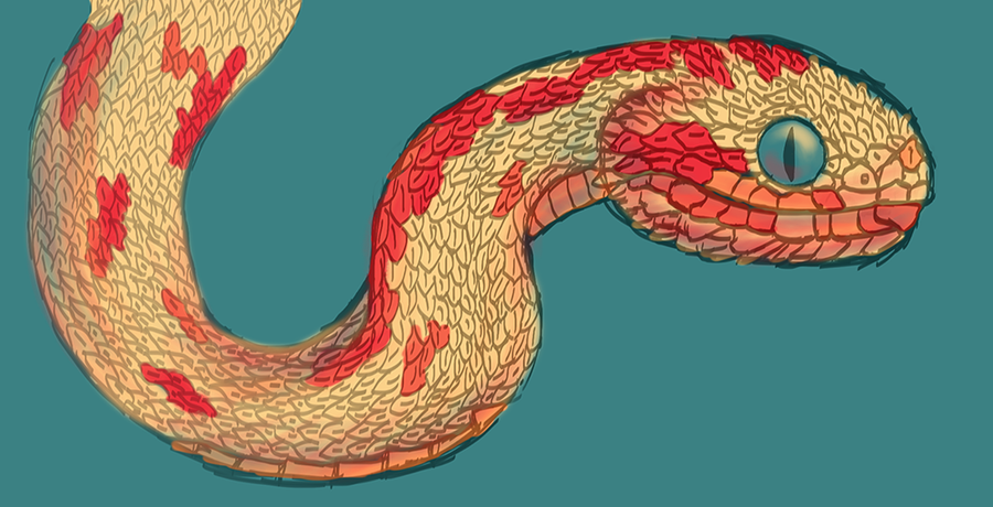 Bush Viper by ribbonworm