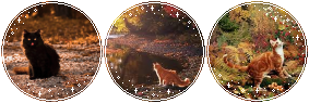 autumn cats by Catatombi