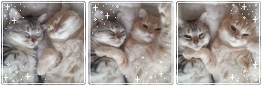 cats by Catatombi