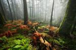 Feeling Forest's Soul