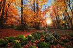 Ode to Autumn
