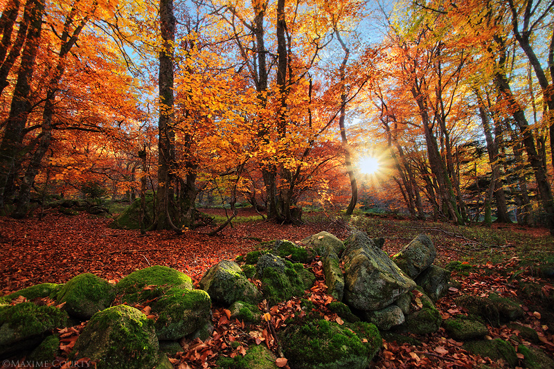 Ode to Autumn by MaximeCourty
