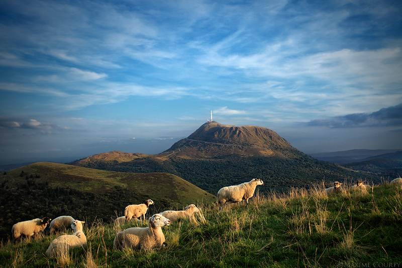 Sheep Relaxing by MaximeCourty