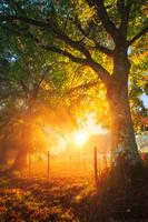 Shining Autumn by MaximeCourty