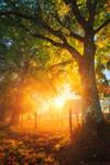 Shining Autumn