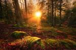 Woodland Enchantment