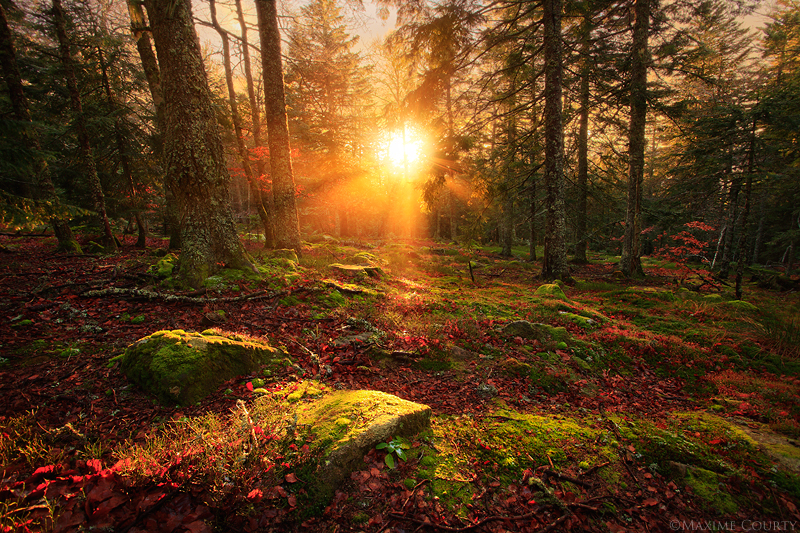 Woodland Enchantment by MaximeCourty