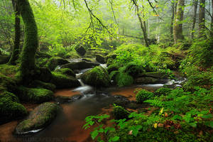 Peaceful Stream by MaximeCourty
