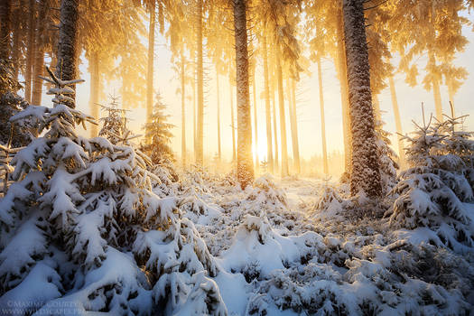 Early Winter's Magnificence