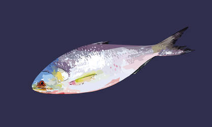 Ilish by xytonmoy