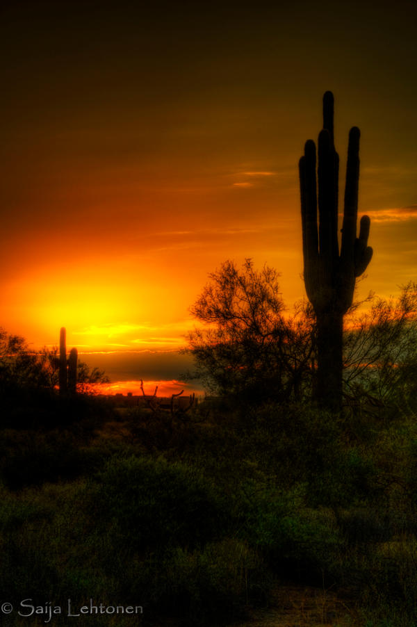 Cactus Sunrise by CeeThruMyEyes