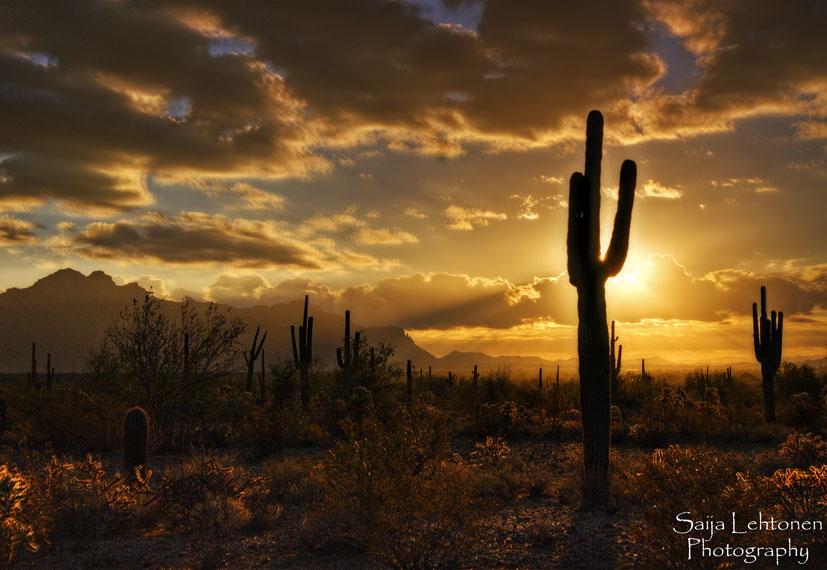 Golden Morning by CeeThruMyEyes