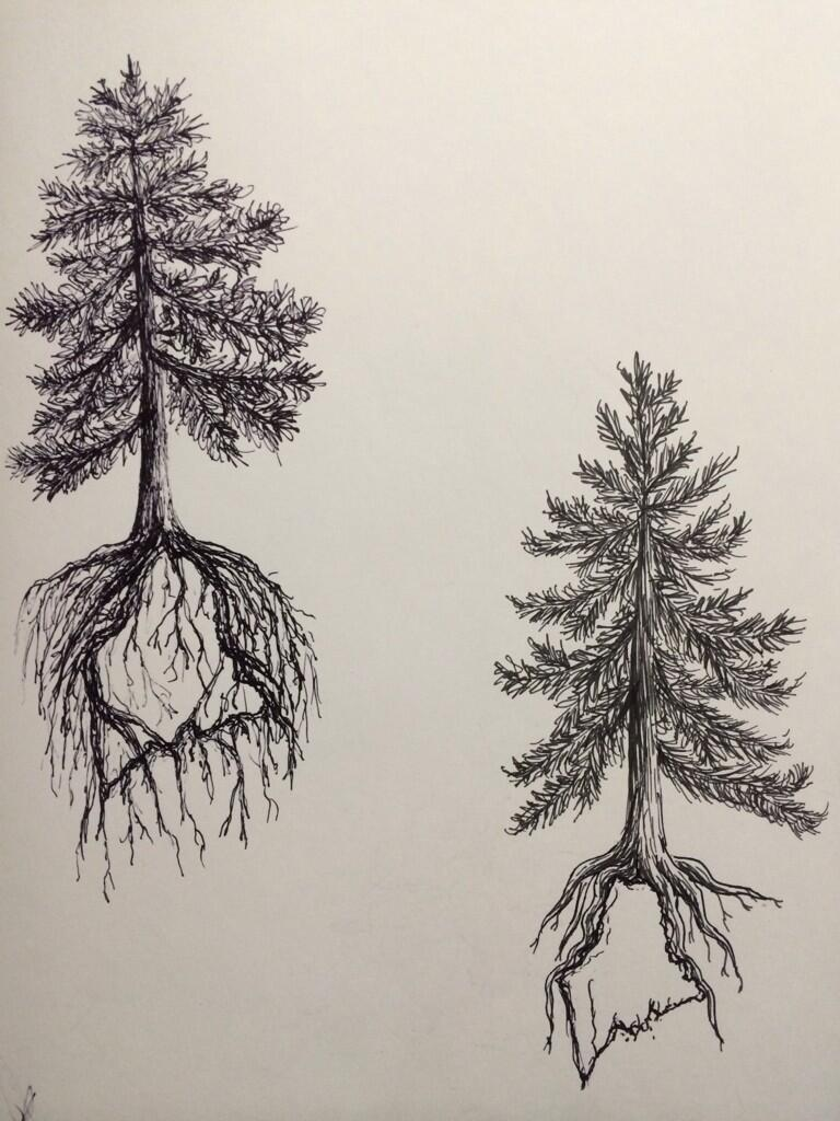 Pine tree state tattoo design two by ramble inthe roots on for Pine tree tattoo ideas
