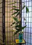 Home-made Ikebana by KisaragiChiyo