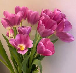 Tulips, Messenger of spring