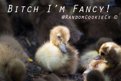 Bitch I'm Fancy! by RandomCookieCx
