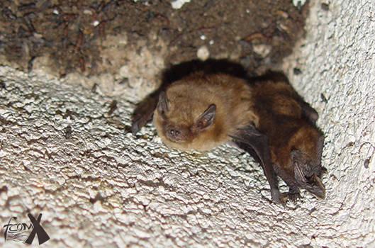 Hidden Bat... at noon