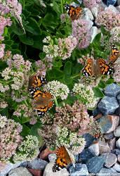 Butterflies of Nebraska by SarahBearQuartz
