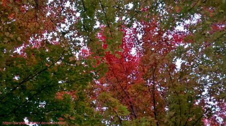 Above the Autumn Branches by SarahBearQuartz
