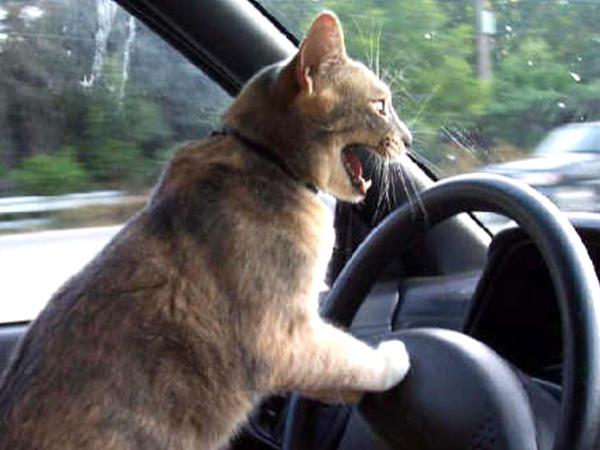 Crazy_Driver_by_daneblaster.jpg