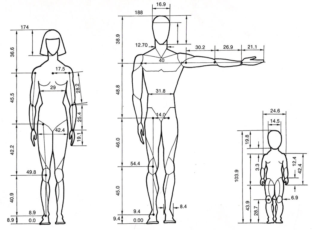 Human proportions by bents stock on deviantart for Size and proportion