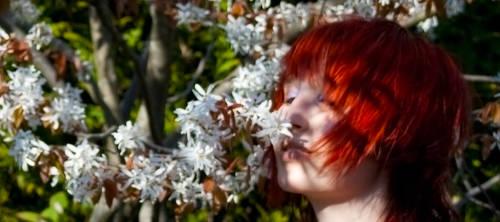 Cherry blossom - fragnance by daf-shadow