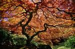 The Tree II
