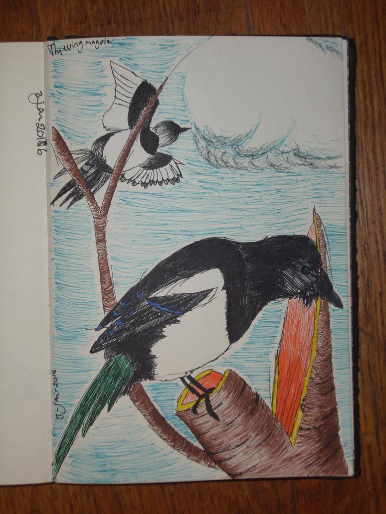 Thieving magpie by servetej