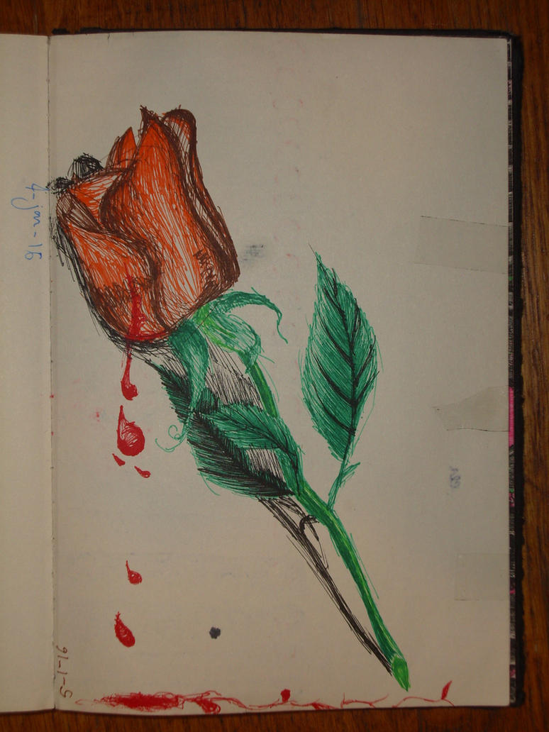 Orange rose by servetej