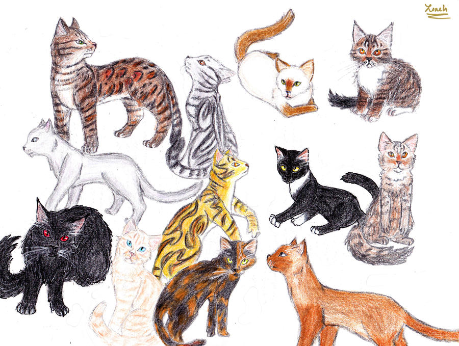 Warrior Cats Bengal Drawing