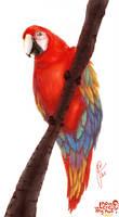 Practice #2: Macaw