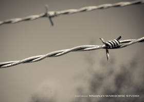 The Wire by WARHORSEstudio