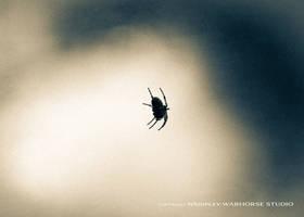 Arachnida by WARHORSEstudio