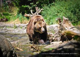 Da Bears by WARHORSEstudio