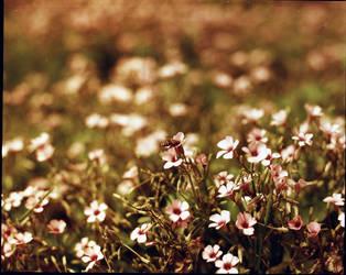 The nectar's paradise