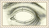 anatomical eye by molly-stamps
