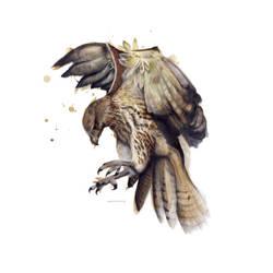 Bird of prey - Print edition - by MBKKR