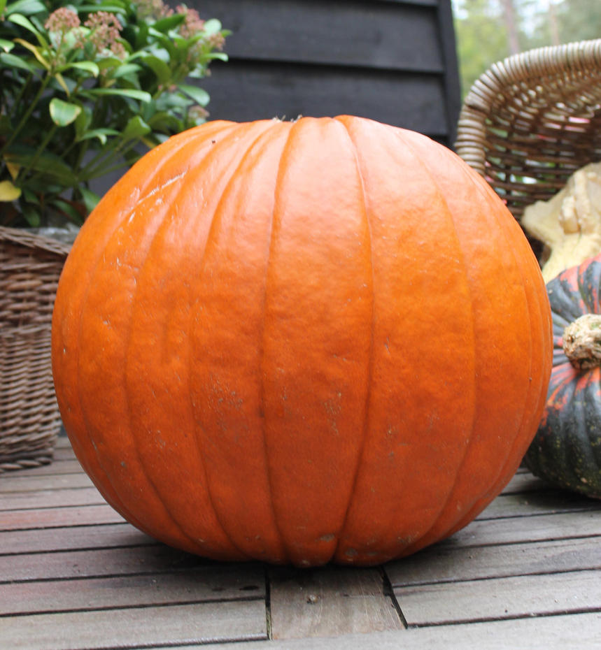 Pumpkin by MBKKR