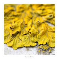 Lichen by MBKKR