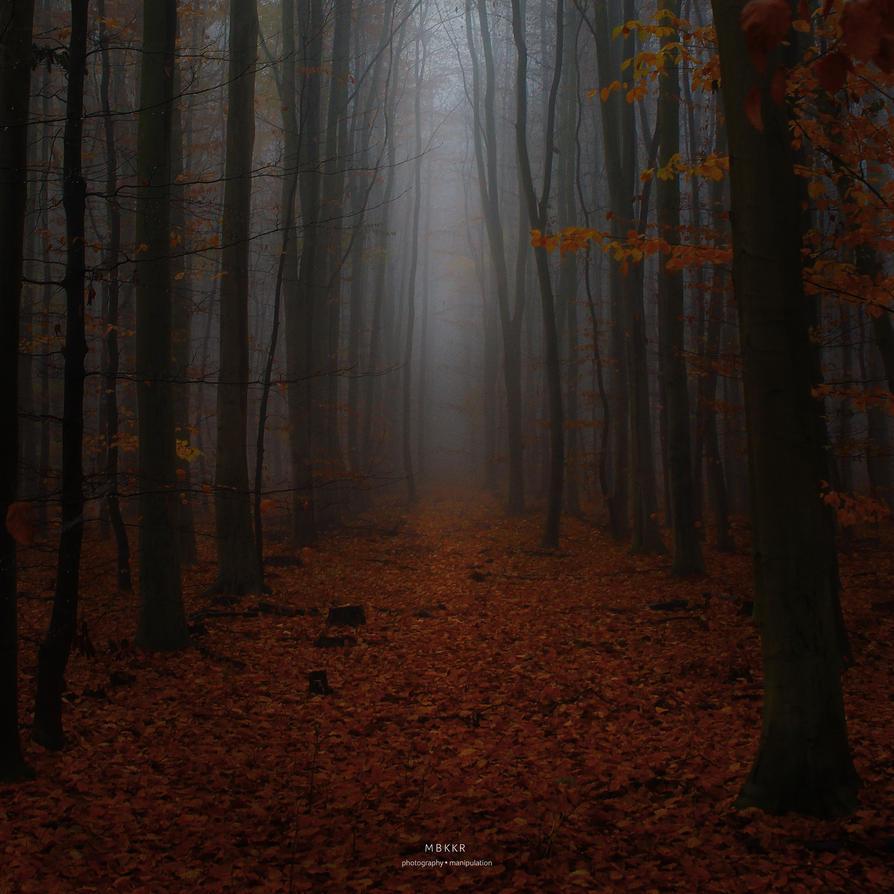 Autumn fog by MBKKR