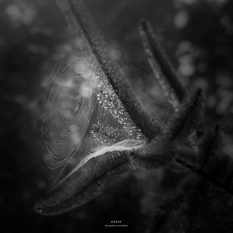 little spider by MBKKR