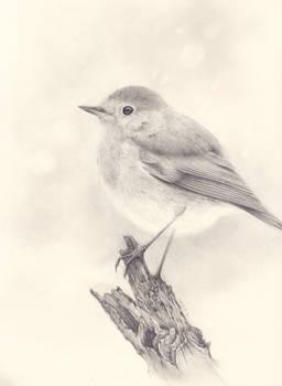 Roodborstje (Robin)
